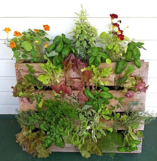 Gallery For Vertical Vegetable Garden Pallet