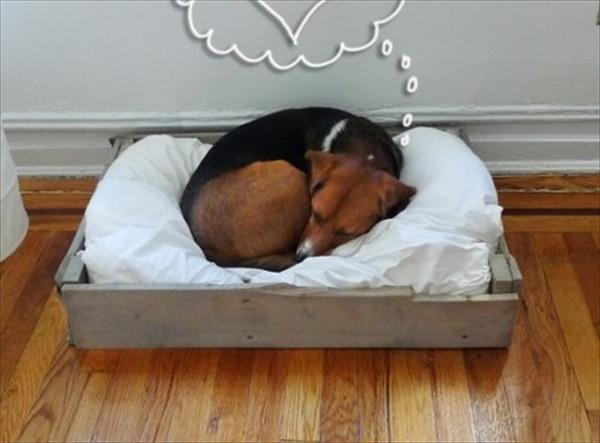 pallet dog bed plans